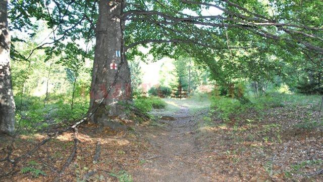 Pădurile virgine ale Gorjului trebuie protejate (FOTO: Eugen Măruţă)