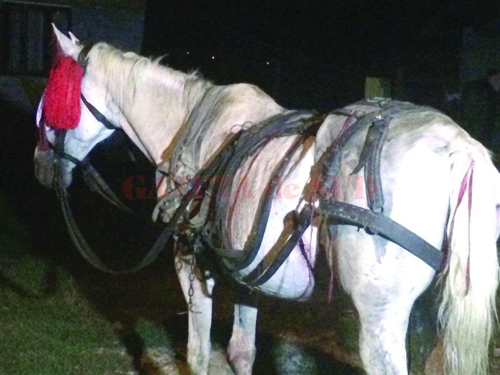 Calul a fost tratat de un medic veterinar