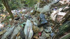 Pădurea de la Leamna s-a transformat într-o adevărată groapă de gunoi ()