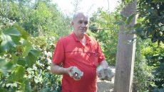 Ion Stroe arată izolatorii care au căzut de pe stâlpul aflat în grădina sa (FOTO: Traian Mitrache)