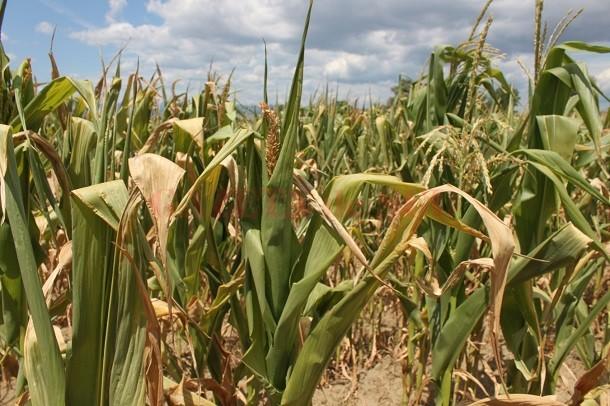 Pe terenurile agricole se menține deficit de umiditate în sol (Foto: actualitateagorjului.ro)