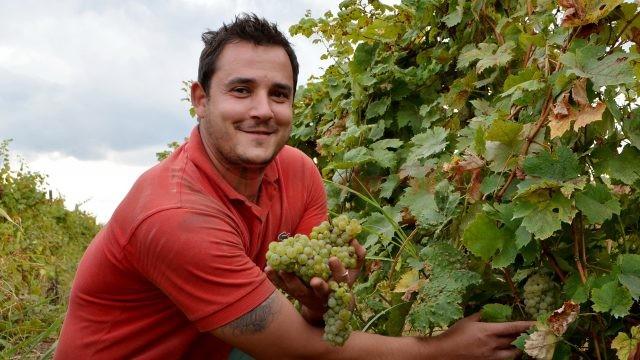 Alexandru Şilcă, unul dintre cultivatorii de viţă-de-vie, mândru de recolte (Foto: Bogdan Grosu)