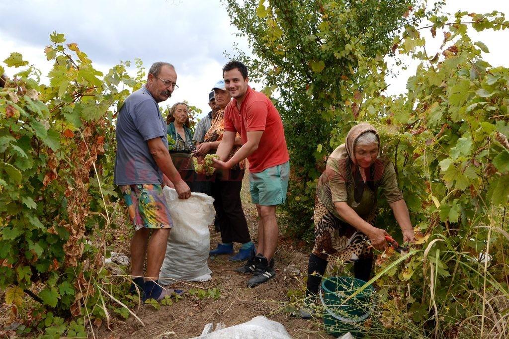 Localnici din Oprişor, la vremea culesului de vii (Foto: Bogdan Grosu)