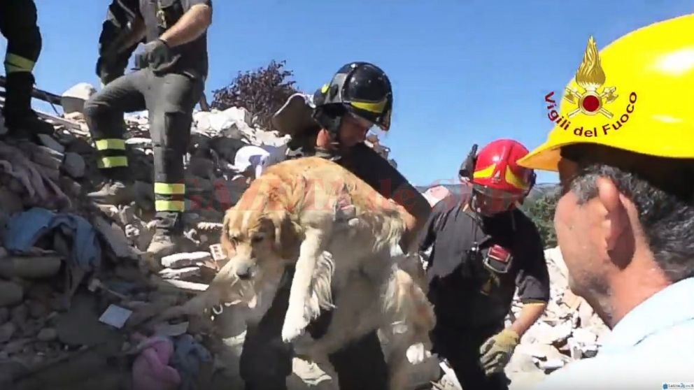 HT_italy_quake_dog_rescue_3_jt_160902_16x9_992