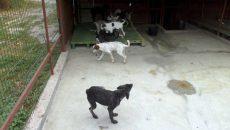 adapost canin