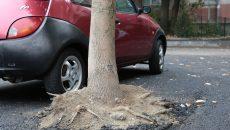 Copacul asfaltat din parcarea renovată în cartierul Craiovița Nouă (Foto: Lucian Anghel)
