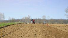 Locuitorii din mediul rural care intră acum în programul de cadastrare gratuită au avantajul că din 2018 vor primi subvenții APIA. Cine nu are terenurile cadastrate până în 2018 nu mai poate primi subvențiile europene (Foto: Arhiva GdS)