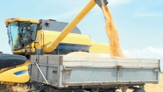 Fermierii spun că grâul a avut acelaşi preţ şi la recoltare, şi din depozit  (Foto: captura video)