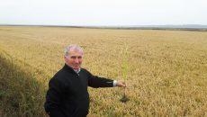 Liviu Rotaru, inspector principal la Compartimentul Agricol din cadrul Primăriei Rojiște, în control la orezărie