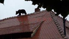urs-sibiu-1