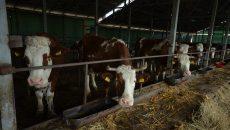 Doar două ferme din Dolj urmează să se extindă cu bani de la stat