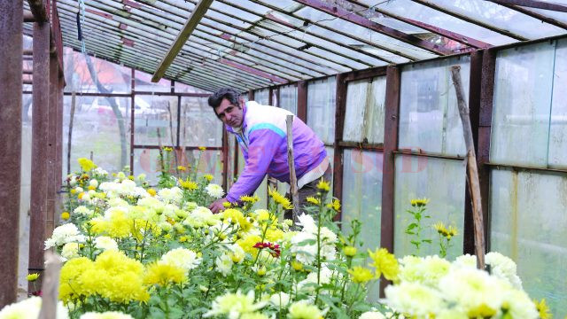 Valerică Gică, unul dintre cultivatorii de flori din Cerneţi (Foto: Lucian Anghel)