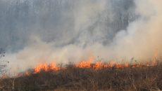 incendiu vegetatie uscata 1