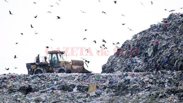 Ciorile zboară nestingherite deasupra gropii de gunoi (Foto: Bogdan Grosu)