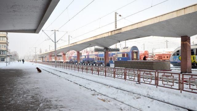 Peroanele sunt acoperite de zăpadă cu gheaţă (Foto: Bogdan Grosu)
