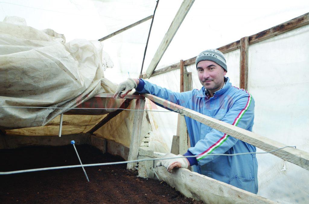 Alin Șalău, cel mai mare producător de răsaduri din Dăbuleni (Foto: Bogdan Grosu)