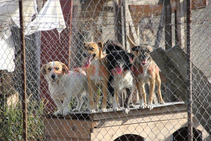 Hrana uscată a câinilor comunitari costă este 100.000 de lei