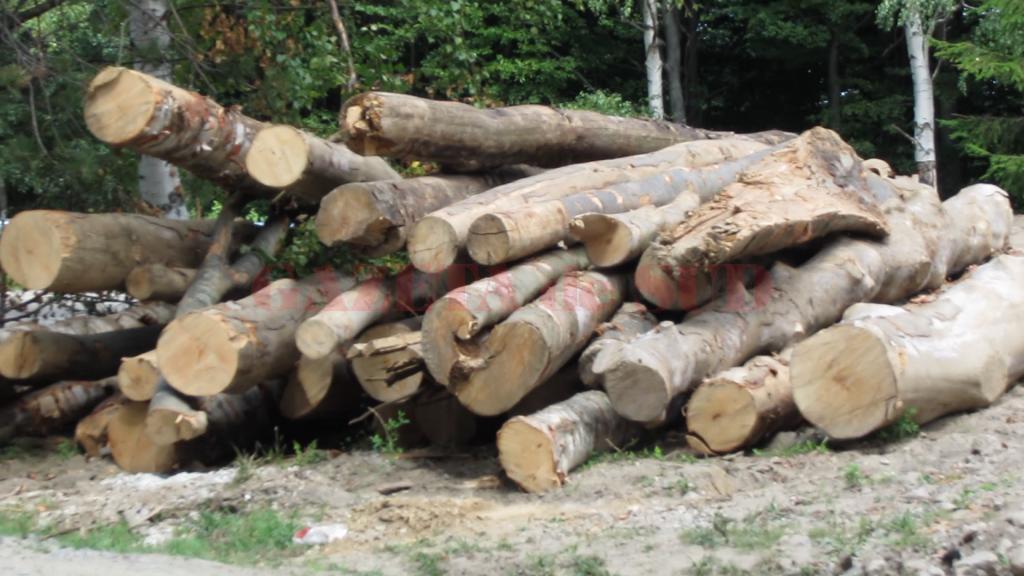 furt-lemne-21
