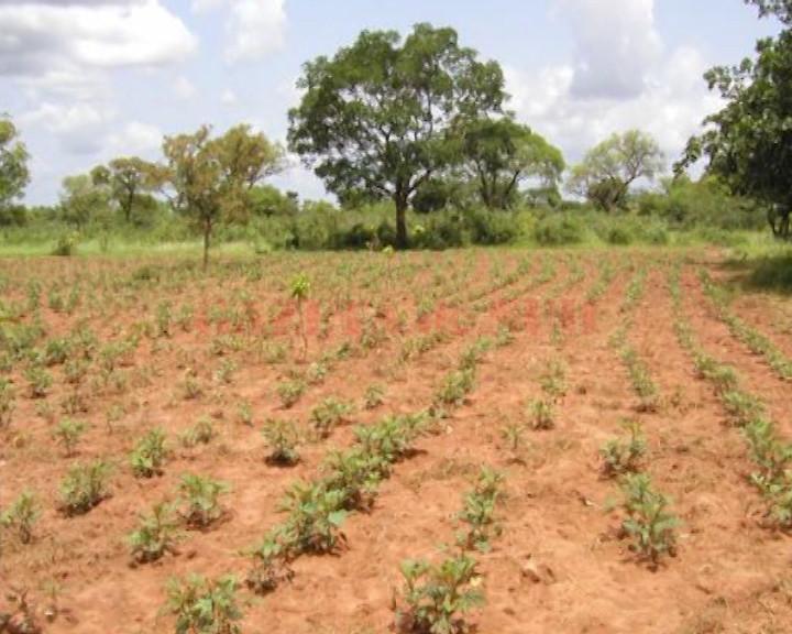 Specialiştii Direcţiei Silvice Dolj spun că judeţul nostru este deficitar la capitolul suprafeţe împădurite