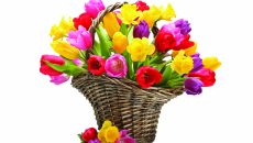 Purple Mauve Tulips Red Daffodils Yellow Spring Basket Flowers Flower Wallpaper Hd Free Download