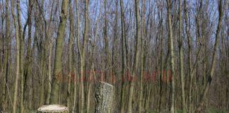 Cercetat pentru furt de lemne din pădure (Foto: Arhiva)