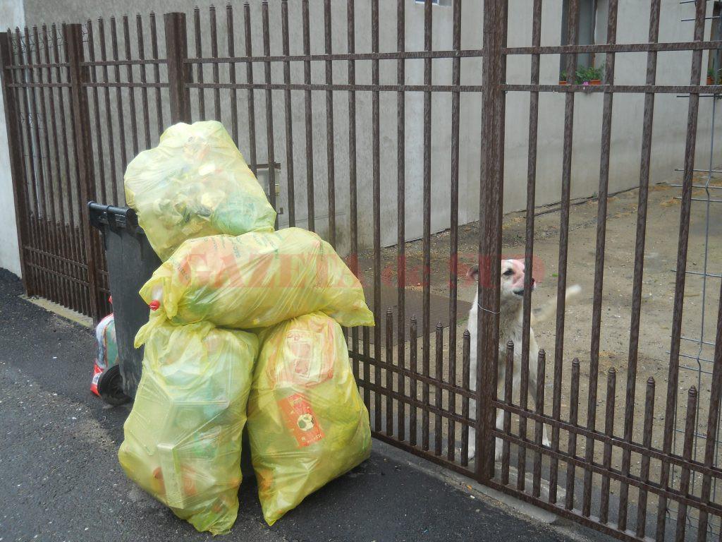 Polaris nu vrea să transporte gunoiul menajer în alt judeţ