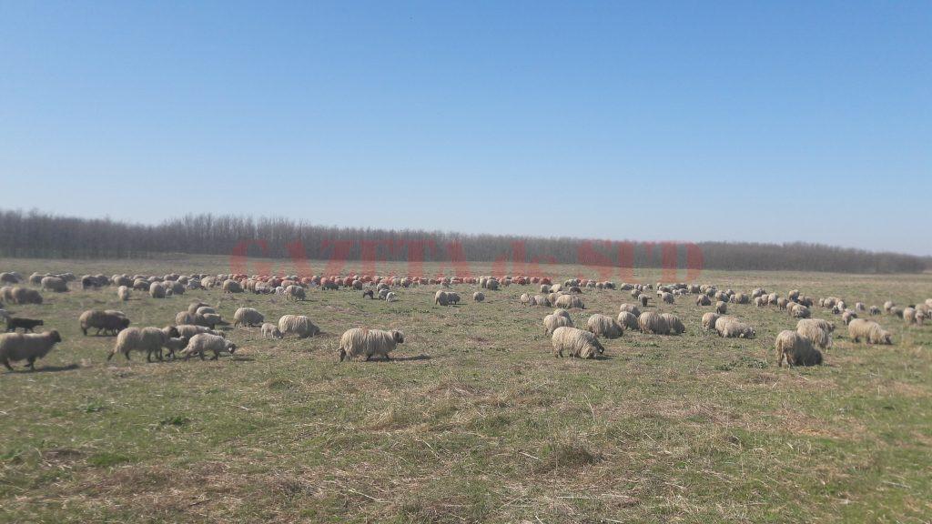 Turma de oi la Jiana