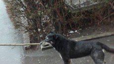 Câinii comunitari continuă să trăiască pe străzile din Târgu Jiu