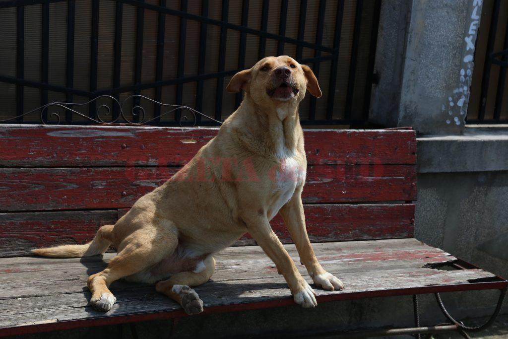 Pentru microciparea câinilor, reprezentanţii DSVSA Dolj vor să solicite sprijinul autorităţilor locale