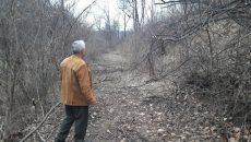 Pădurea Strehareţ, lăsată pe mâna hoţilor de lemne