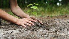 plantare-e1486458713511