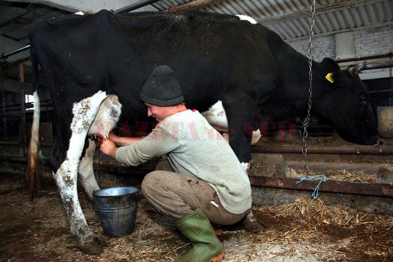 producatori-de-lapte