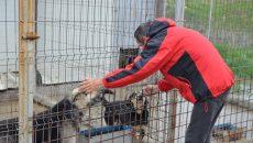 Marius a căutat minute în şir, în adăpost, câinele ridicat de hingheri, în urmă  cu aproape două săptămâni, din Filiaşi  (Foto: Claudiu Tudor)