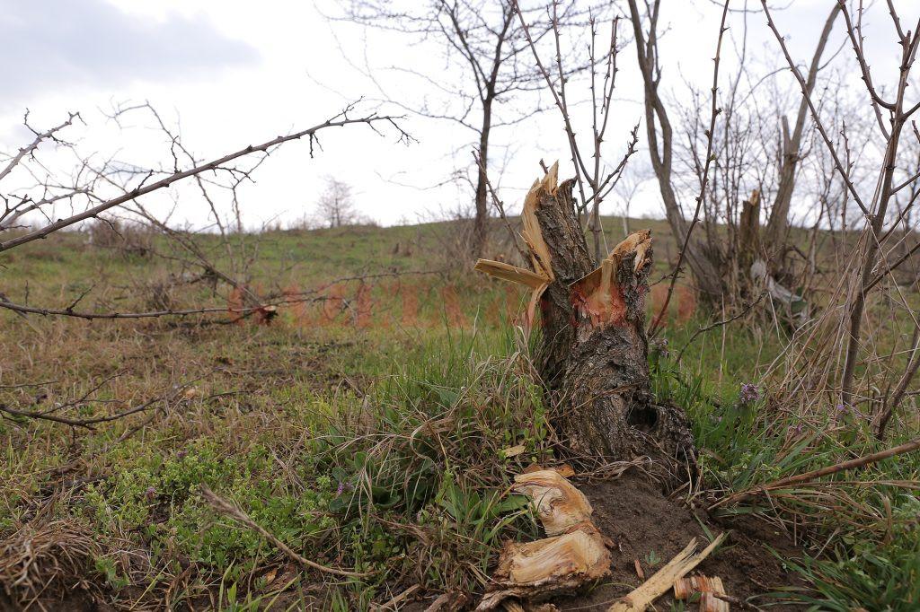 Pădurile care aparţin localnicilor din Desa aproape au fost rase de pe faţa pământului (Foto: Claudiu Tudor)