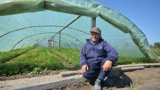 Agricultorii din Răcari spun că nu mai este timp să înlocuiască răsadurile distruse de ger cu altele ()