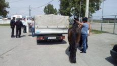 foto 1 cal politia locala