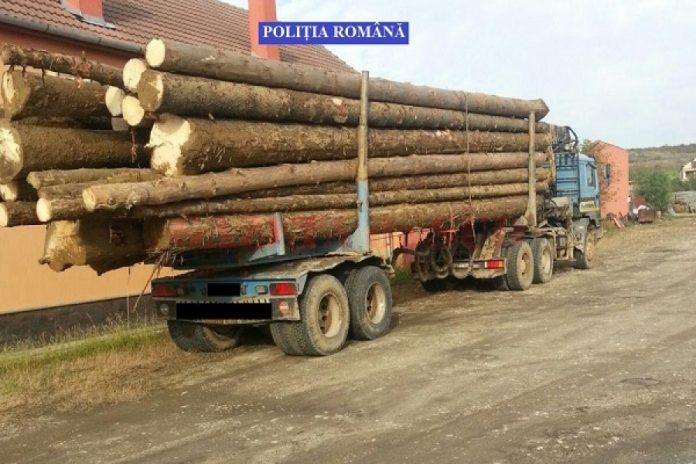 Transportatorii de material lemnos, în atenția polițiștilor