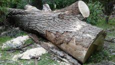 copaci taiati parcul central