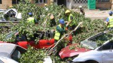 Mai multe mașini distruse de un copac