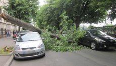 Un tei de pe strada Matei Basarab a căzut peste două autoturisme (Foto: Bogdan Grosu)