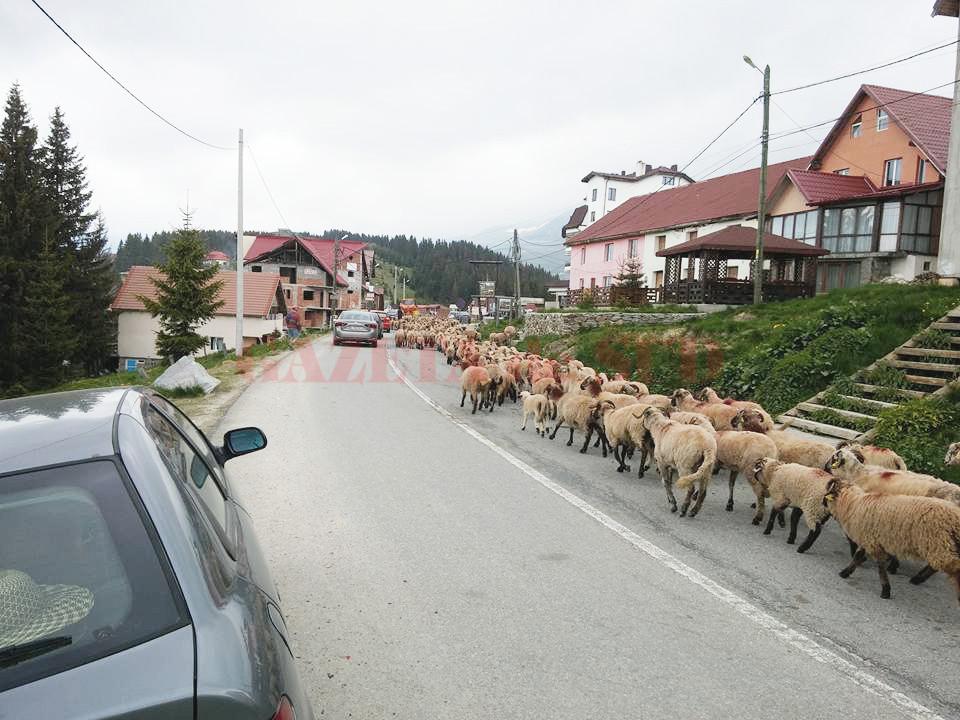 Rânca este cea mai tânără staţiune montană din ţară
