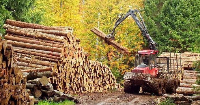 Operatiuni-de-prelucrare-a-lemnului-2