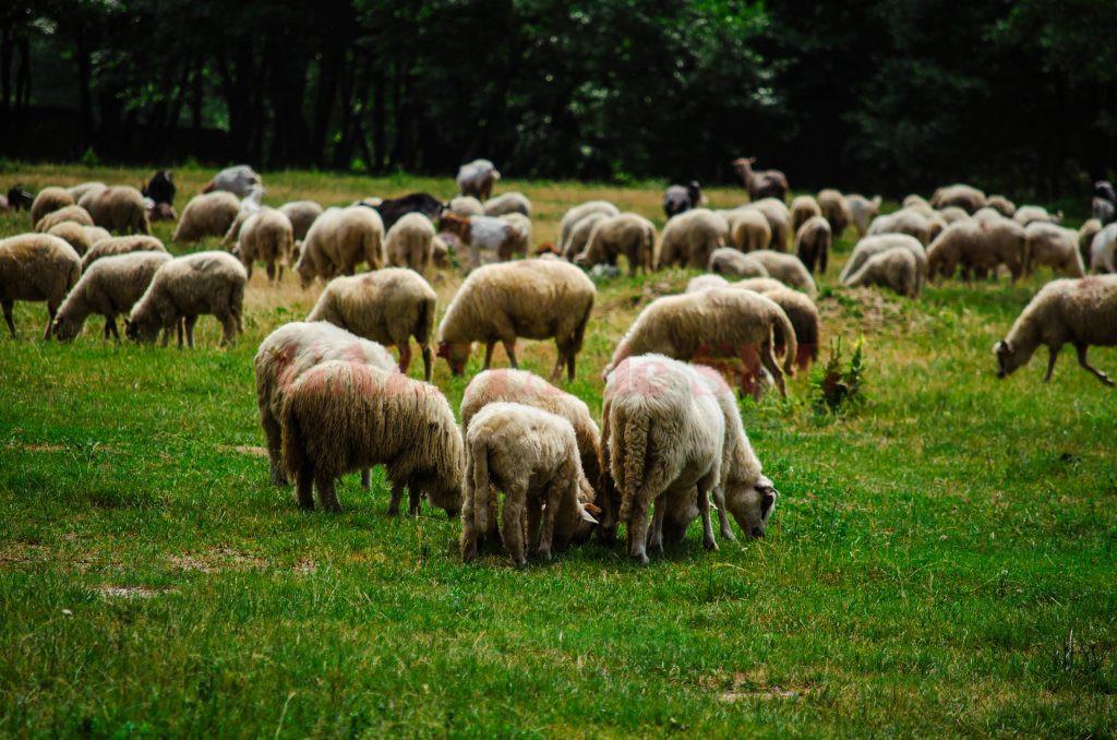 Procurorii DNA susțin că cinci inculpați au declarat în fals că dețin aproape 100 de hectare de pajiște, obținând în acest fel peste 500.000 de lei de la APIA Mehedinți