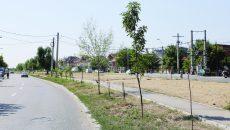 Copacii au fost plantați din proprie inițiativă de localnici pe spațiul verde de pe strada Râului (Foto: Lucian Anghel)
