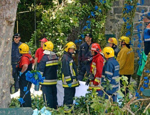portugal-fallen-tree-76717-jpg