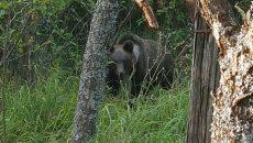 Urşii au început să se apropie de gospodăriile populaţiei