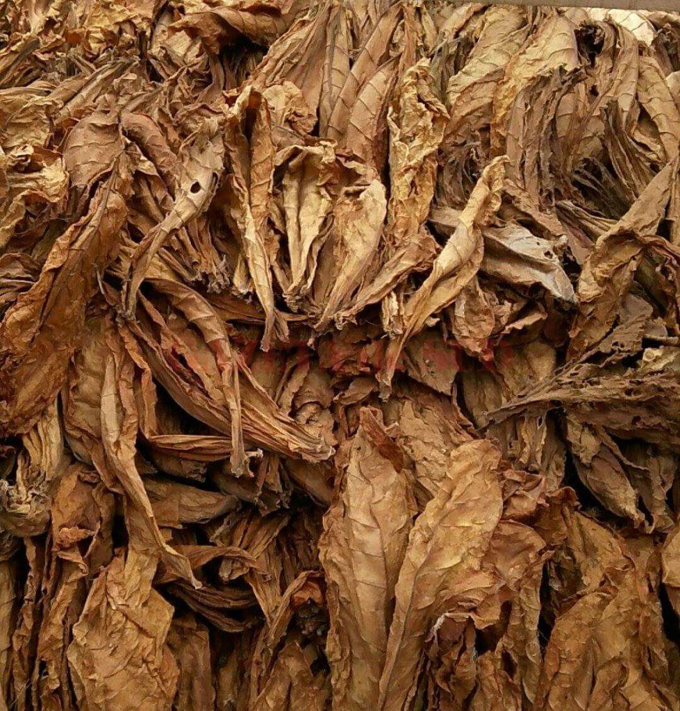 Inspectorii antifraudă au confiscat 11.138 kg de tutun brut, provenit din Bulgaria, de la începutl lunii septembrie.
