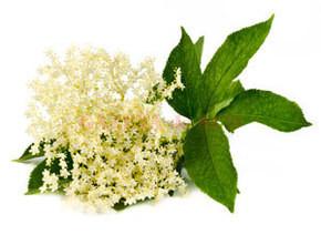 plante medicinale pt slabit)
