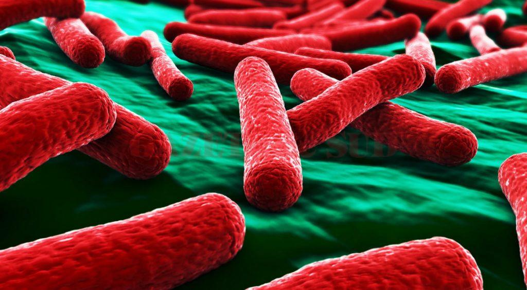 Infectia urinara cu Escherichia Coli