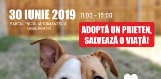 Un nou târgul de adopții canine, la Craiova